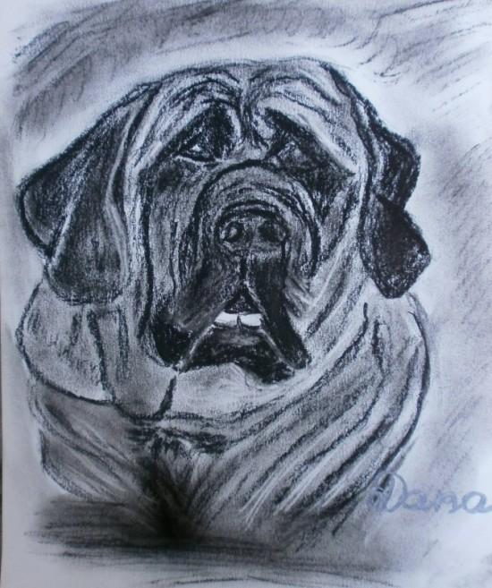 kresba uhlem anglickeho mastifa