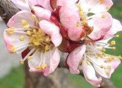 Když kvete krása